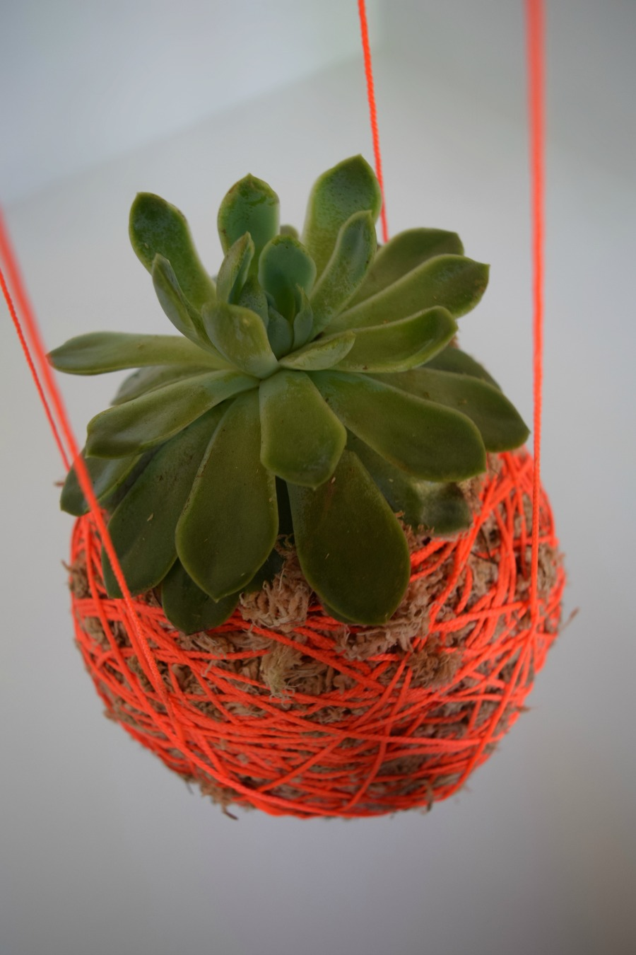 DIY Hanging Moss Ball Planter
