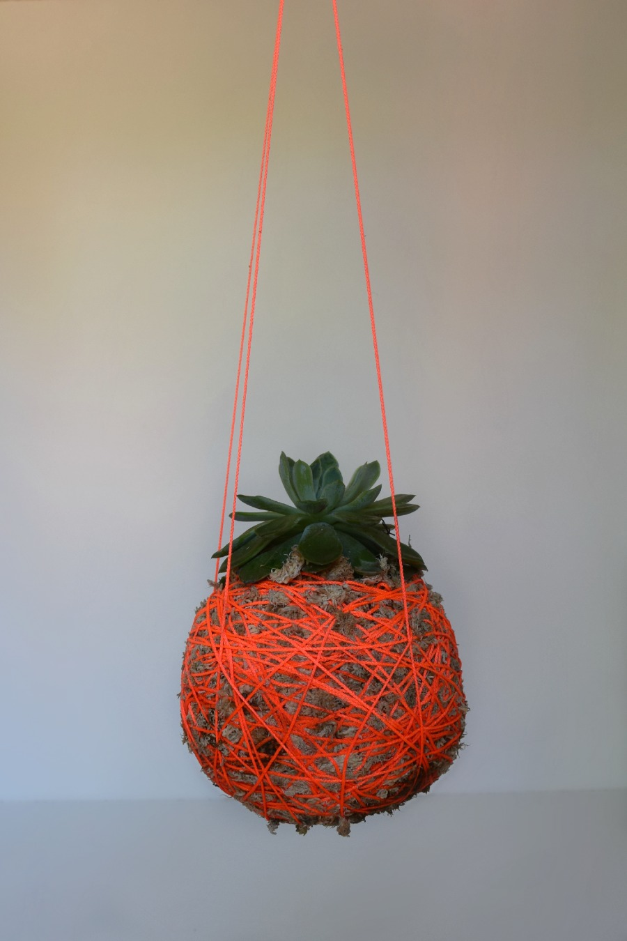 DIY Hanging Moss Ball Planter L Hanging String Plant