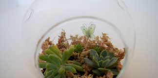 Close up of terrarium