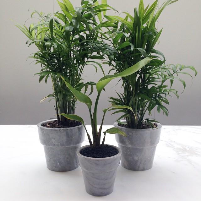 Basic Baby pots