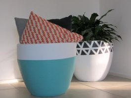 Two pot plant looks at Haymes blog