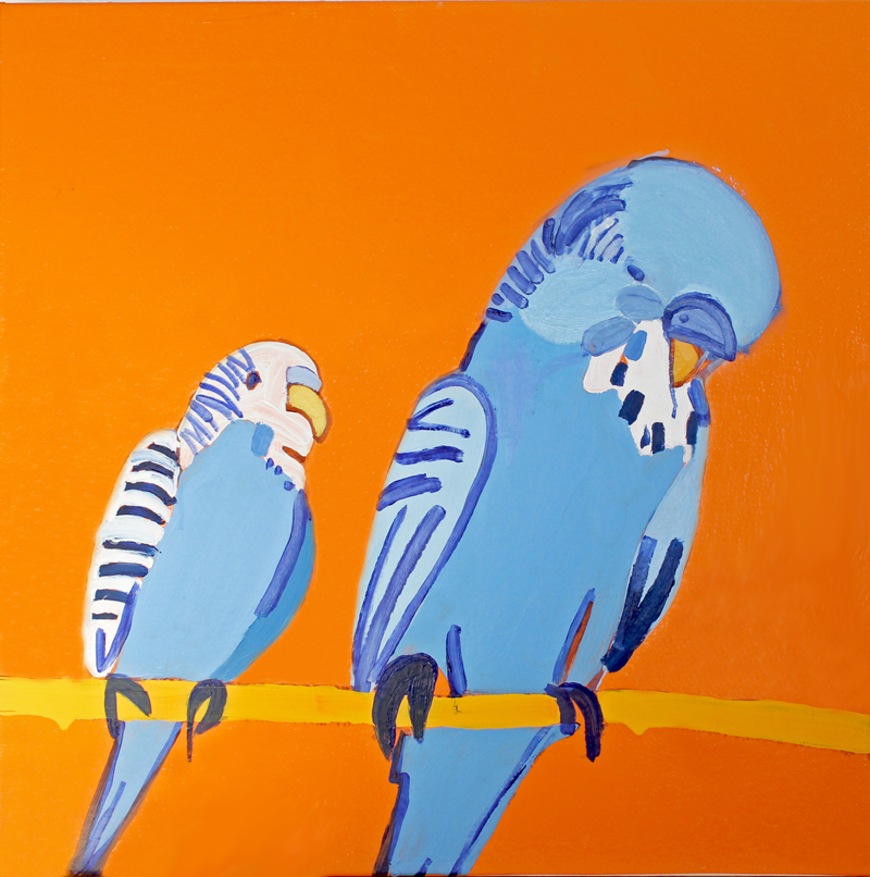 Blue budgies on orange background