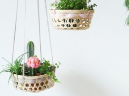 Top 9 indoor plant ideas feature