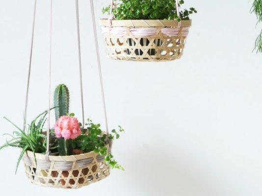 Top 9 indoor plant ideas feature