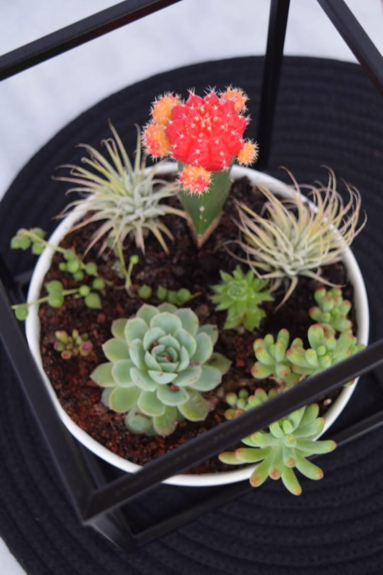Kmart hack succulent garden