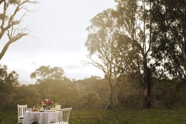 Spring high tea in the woods