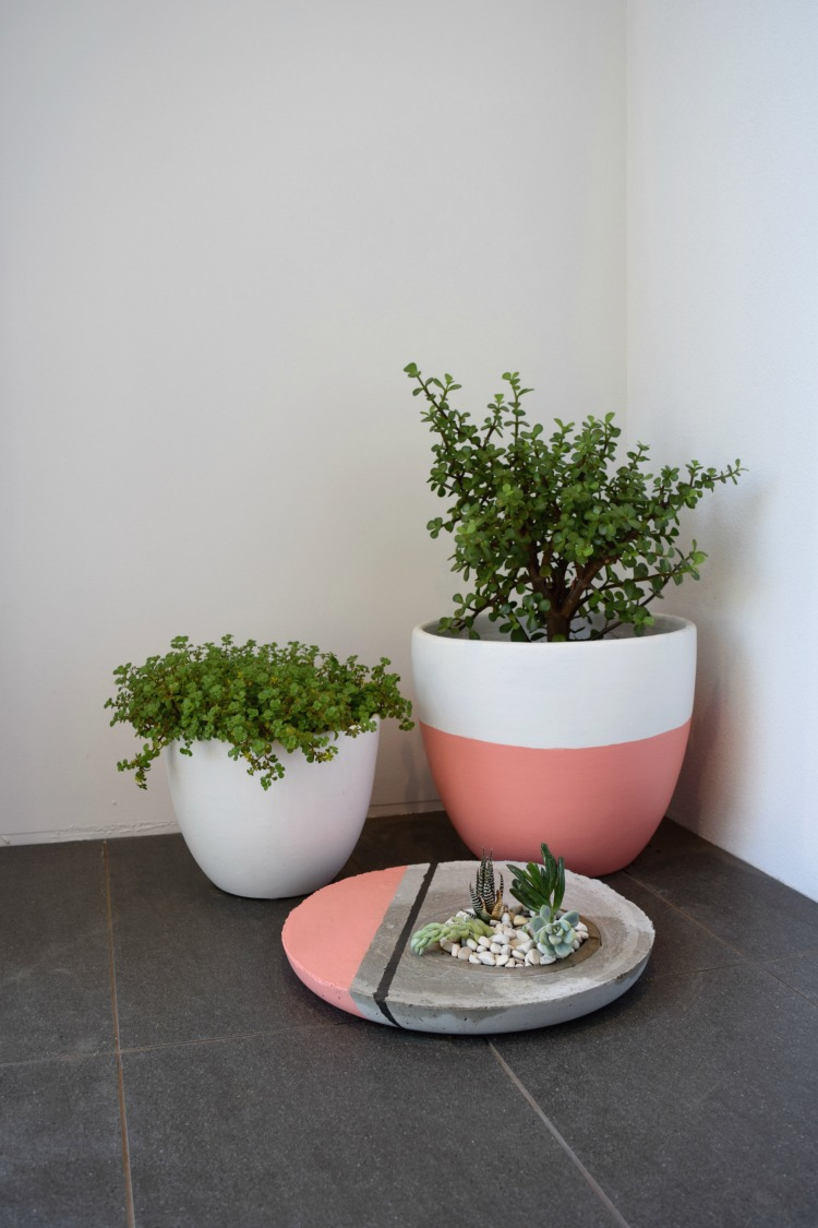 cluster of pot plants and finished Large Concrete Planter