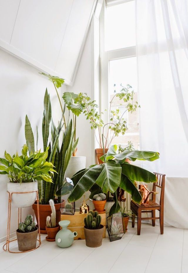Beautiful indoor plants
