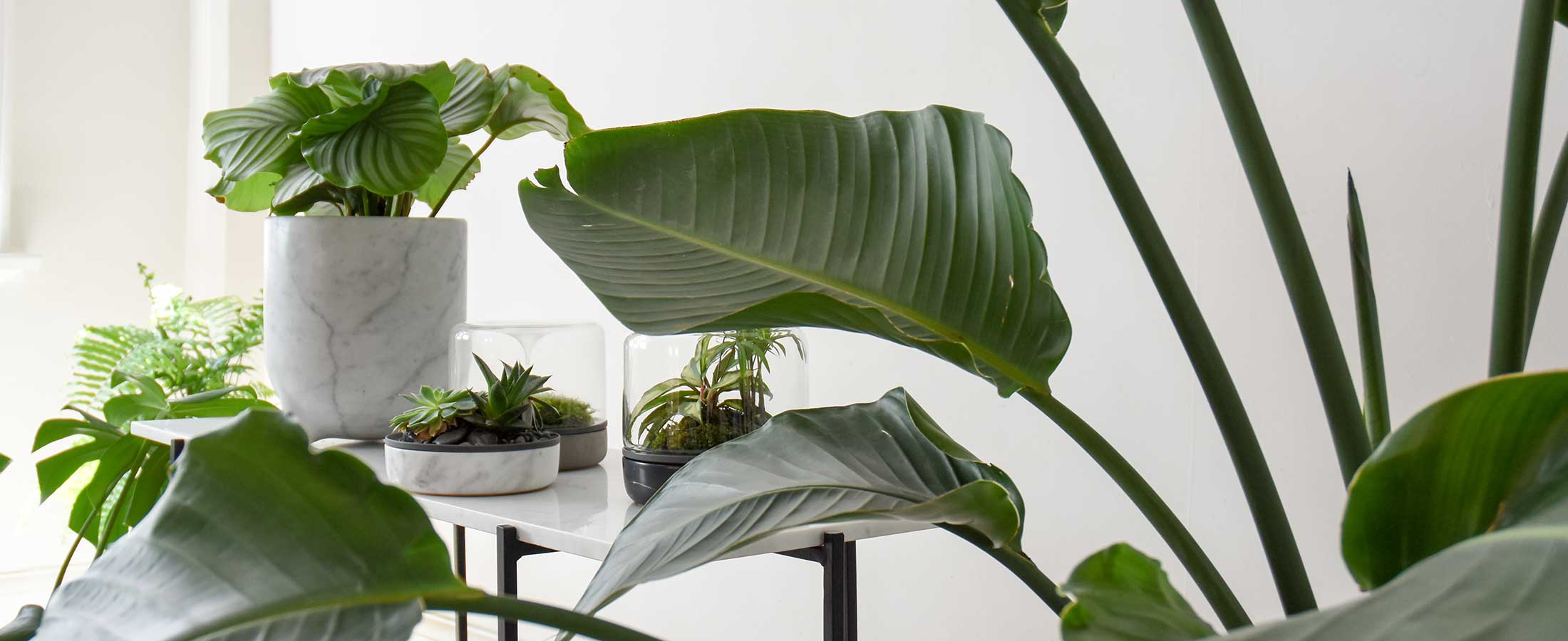 Top 10 trending indoor plants and where to use them for Plant nursery