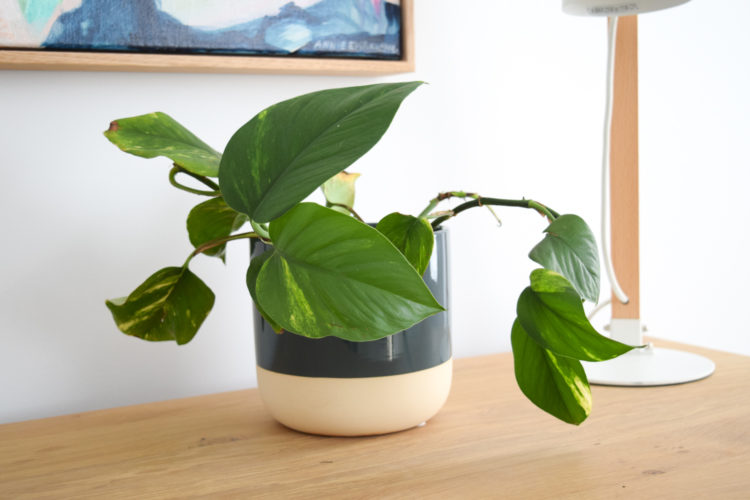 12 Reasons why you're killing your indoor plants: How to keep indoor plants alive