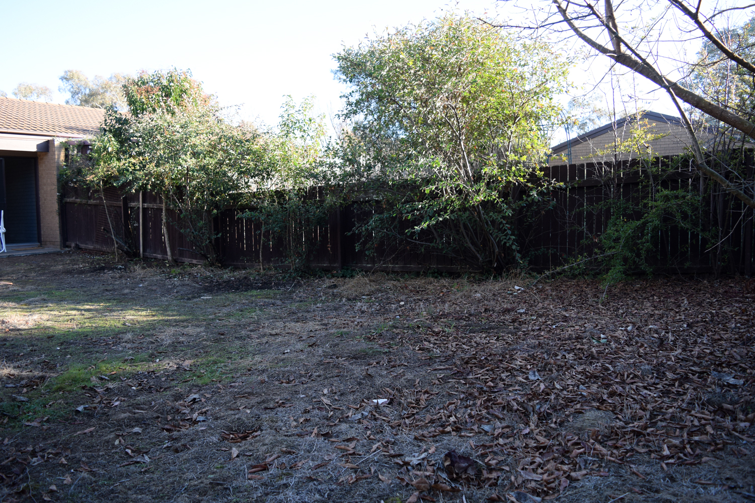 Bonnie backyard before