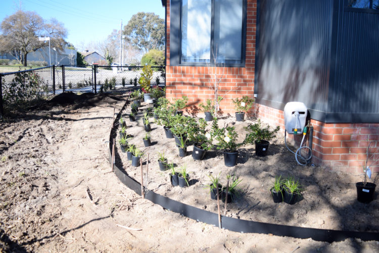 Placing out plants before digging holes