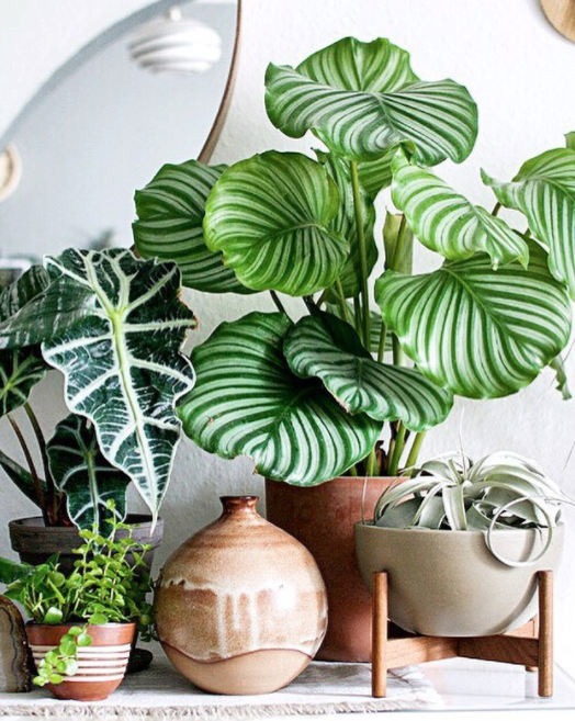 Top 10 Trending Indoor Plants And Where To Use Them