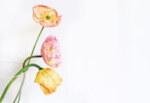 Vase Style Curator Challenge winner