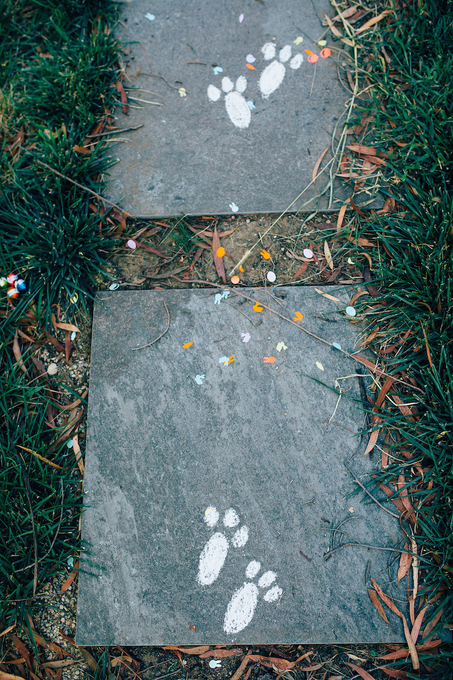 Bunny foot prints