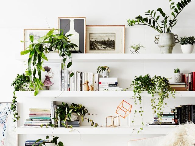 Plants incorporate elements of Feng Shui into your home