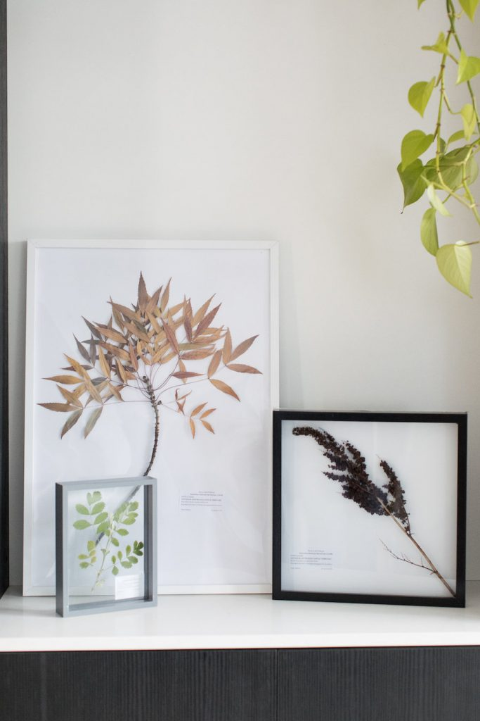 All herbariums