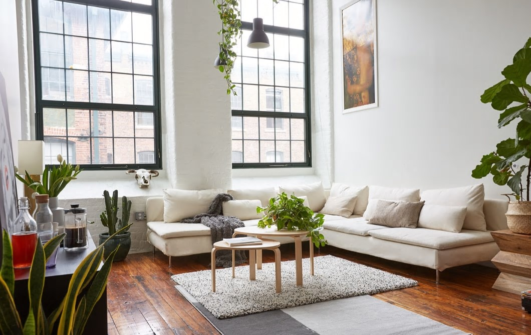 Indoor plants decorating hacks for rental