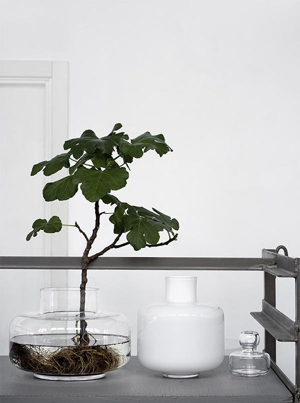 Growing a plant in water