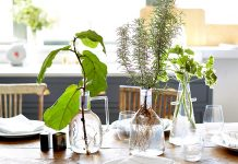 Beautiful herbs and plants in water