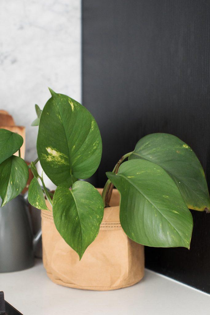 Paper bag for plant