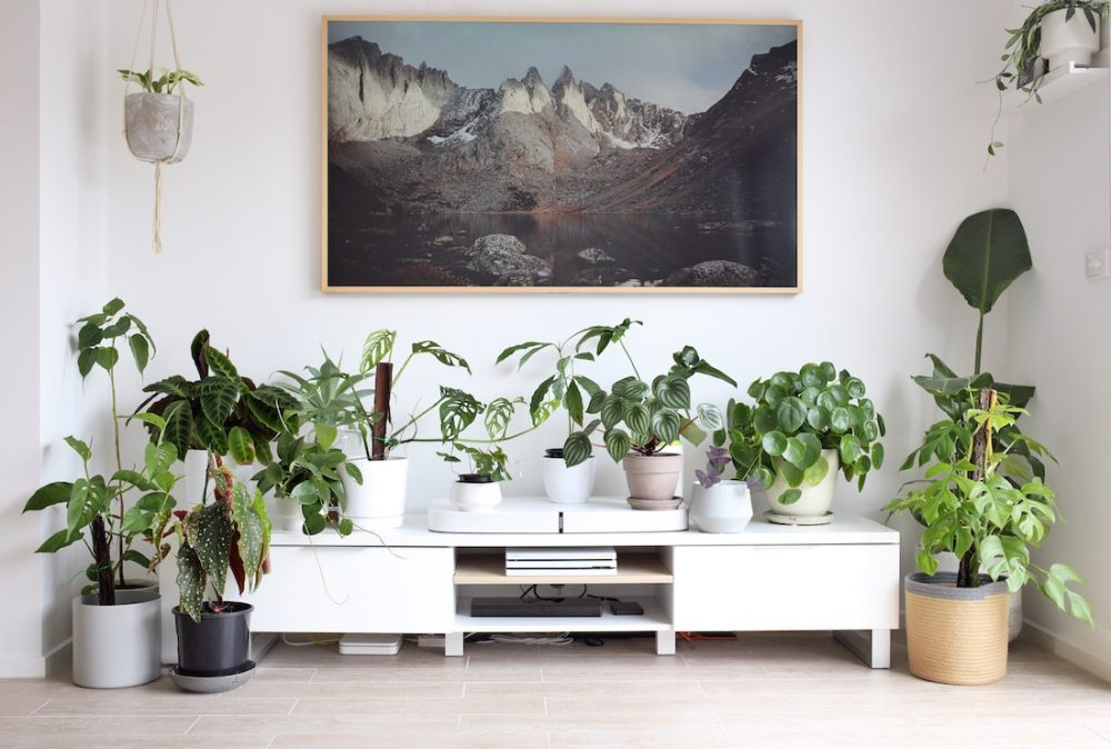 Plant family reasons why you're killing your indoor plants