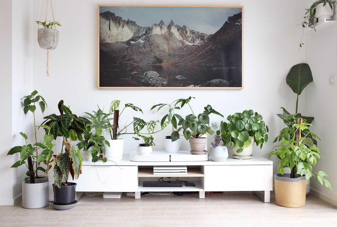 Plant family