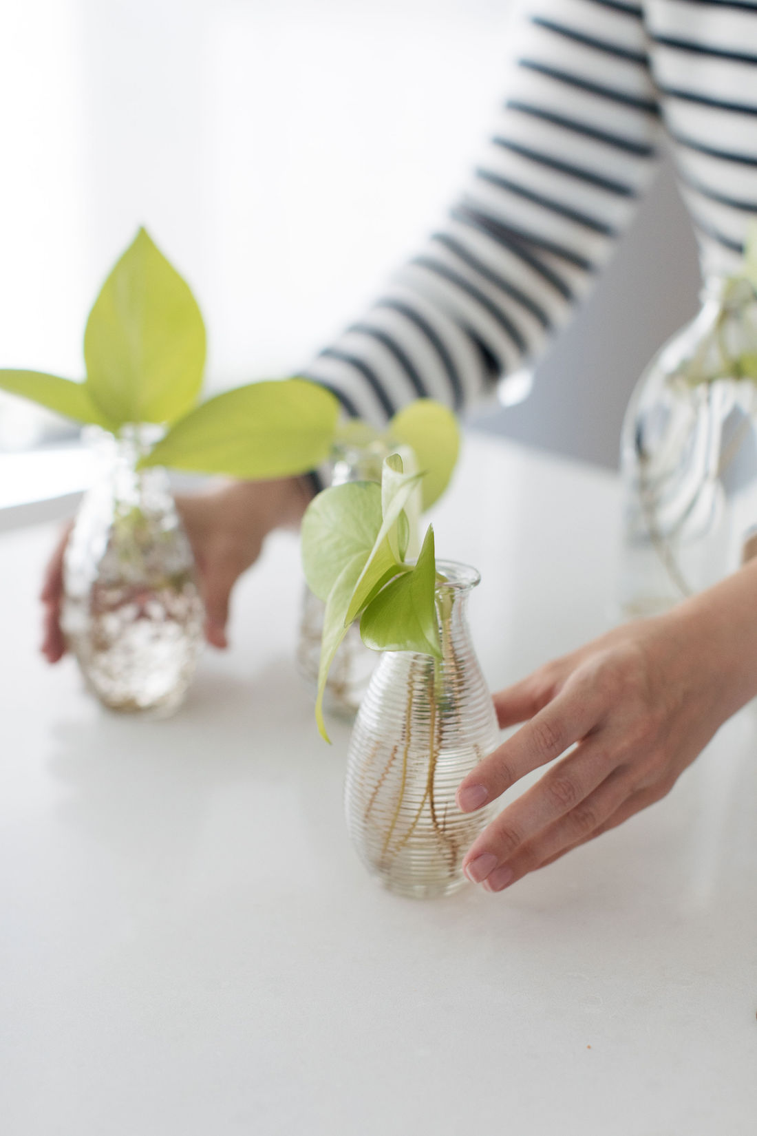 Jars to propagate plants