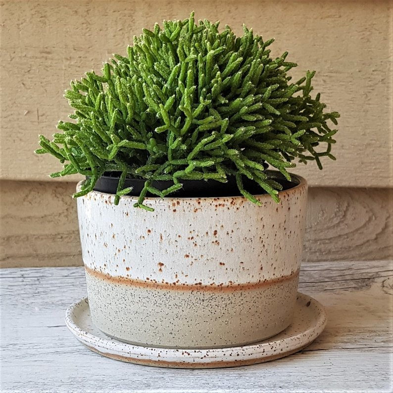 Lilly Pilly Planter