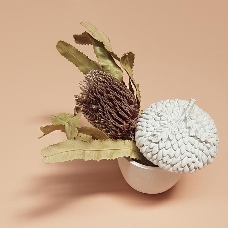 acorn with protea