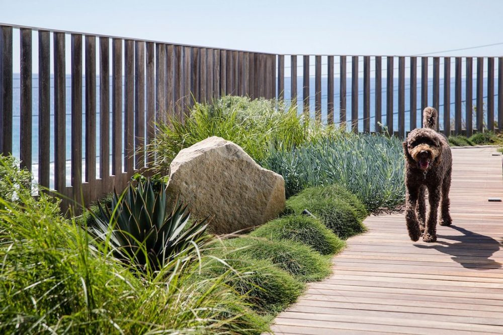 Coastal garden with dog and decking