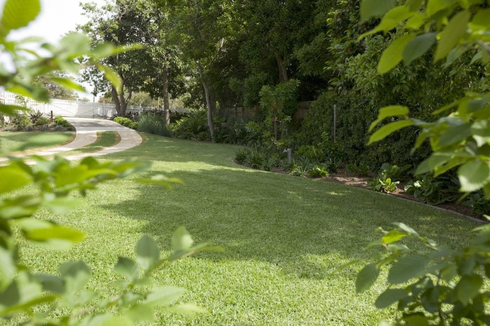 Lush green garden space