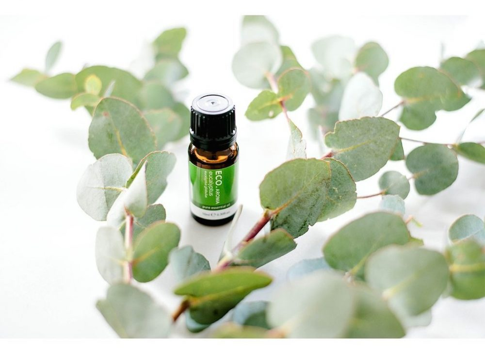 Eucalyptus Eco top 10 essential oils