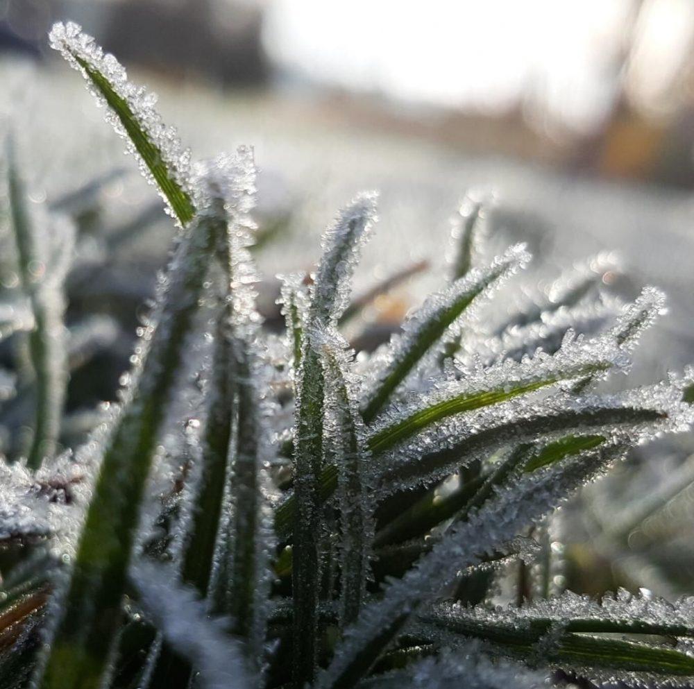 Winter gardening_frosty plants_fredellenterprises