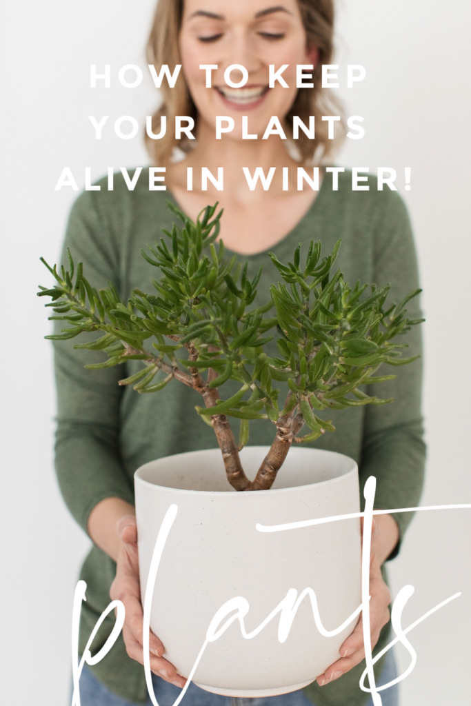 Keep your plants alive in winter