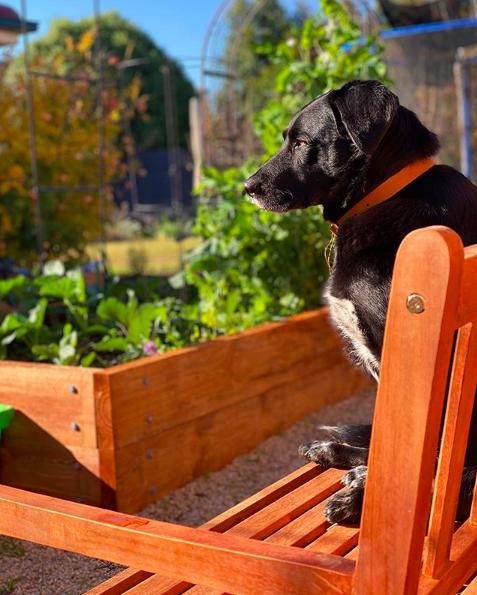Dog in veggie garden