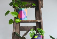 Rainbow pot plants