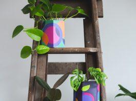 Rainbow pot plants