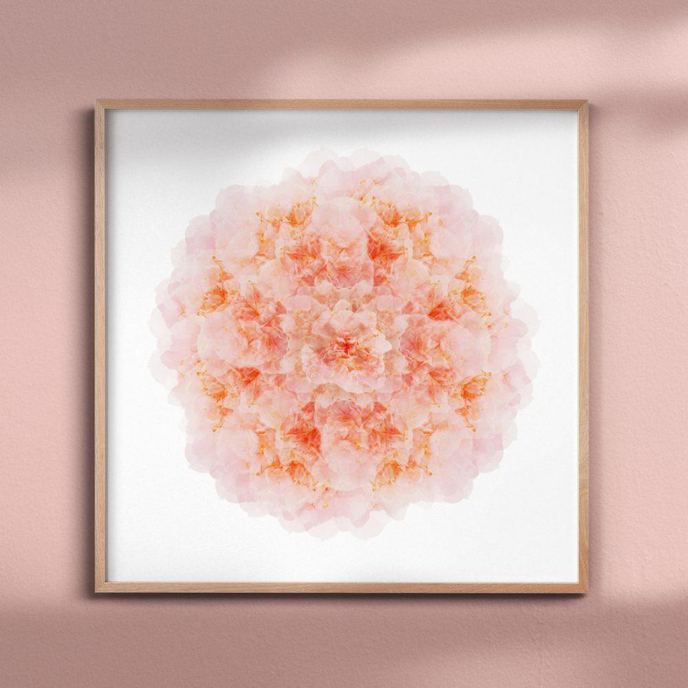 Paper and Flower pink camelia mandala