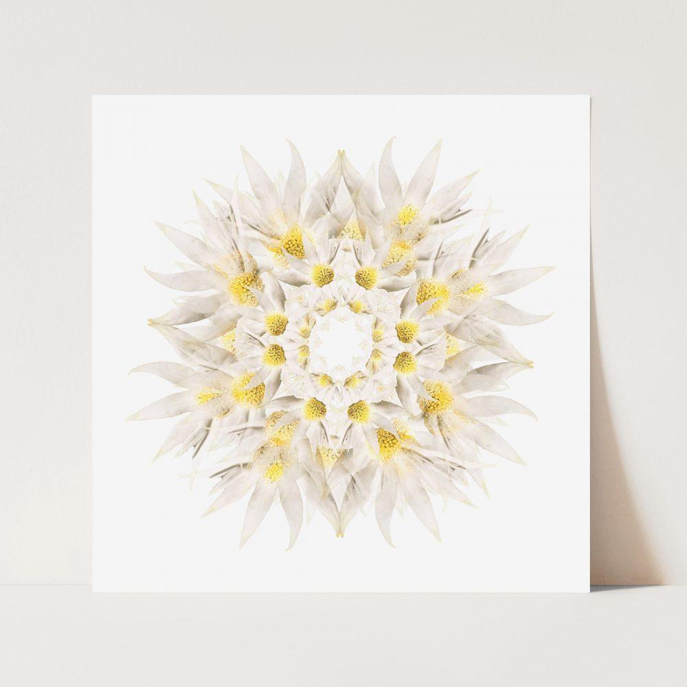 mandala-flannel-flower-paper-and-flower