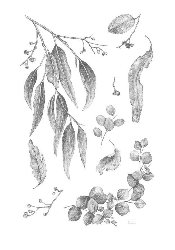 Gumleaf artwork detailed graphite illustrations