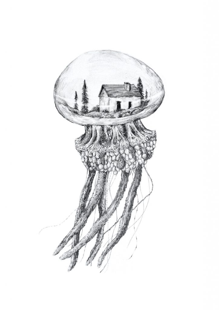 Jelly fish illustration artwork
