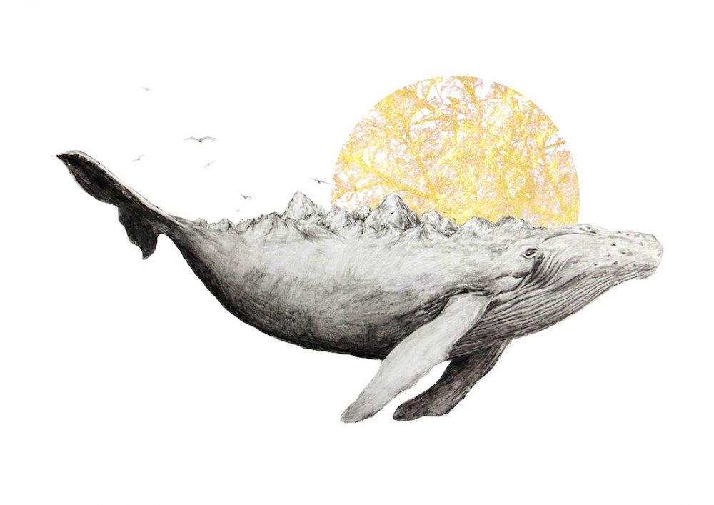Mother whale illustration Ahki detailed graphite illustrations