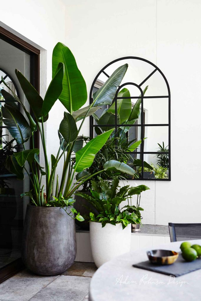 Outdoor plants for small space