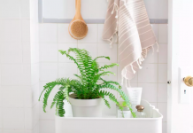 Boston fern in bathroom