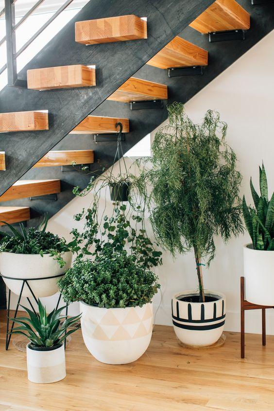 Indoor plants under stairs