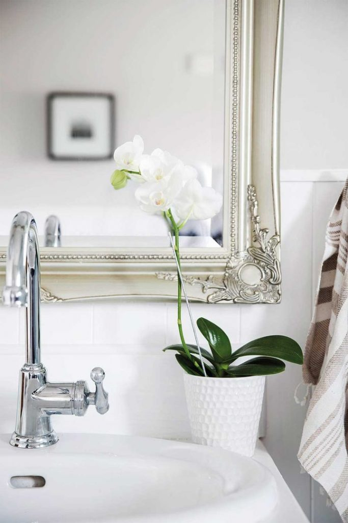 White moth orchid in bathroom