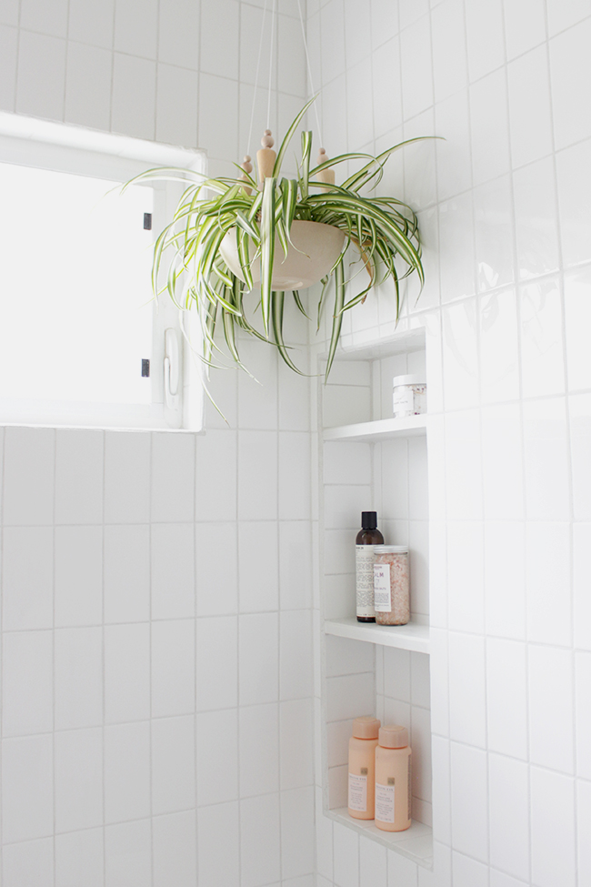 Spider plant in hanging planter in bathroom