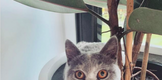 Cat in pot plant
