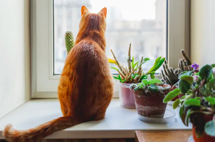 Ginger cat by pot plants